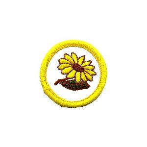 Sb Badge Flower Study
